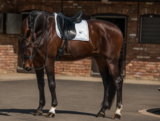 Equestrian Stockholm White Perfection Silver Dressage_