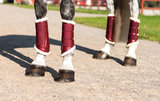 Equestrian Stockholm Beenbeschermers Bordeaux _