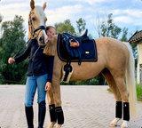 Equestrian Stockholm bandages Black Edition Gold_