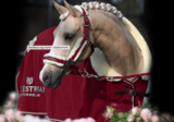 Equestrian Stockholm halster bordeaux met touw_