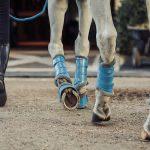 Equestrian Stockholm Parisian  blue peesbeschermers _