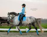 Equestrian Stockholm Parisian blue dressuur _