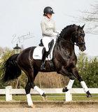 Cavalleria toscana  Sweatshirt Grijs_