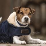 Kentucky hondenjas  navy_