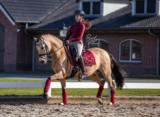 Equestrian Stockholm bandages Bordeaux _