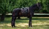 Equestrian Stockholm Golden Brown Dressage_